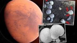 """Hàng ngàn """"cây nấm"""" được phát hiện trong các bức ảnh chụp sao Hỏa của NASA"""