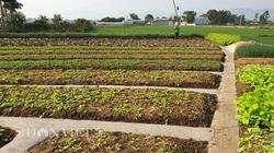 Lão nông thu hàng trăm triệu đồng mỗi năm từ mô hình kinh tế hiệu quả