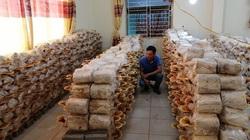Sơn La: Thu gần 10 triệu đồng mỗi ngày từ trồng thứ cây nhìn như nhũ đá