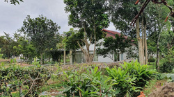 Ba Vì (Hà Nội): 20 biệt thự trái phép trên đất trang trại bao giờ mới bị cưỡng chế?