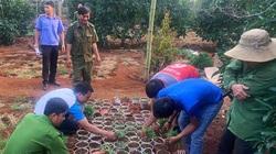 """Đắk Lắk: Phát hiện người dân trồng cần sa """"để nuôi gà"""""""