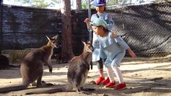 Vườn thú 'kiểu Australia' gần Đà Lạt