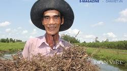 Vùng trồng sương sáo có hương thơm đặc biệt ở miền Tây