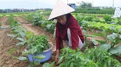 Đà Nẵng: Tổng kết 10 năm thực hiện Kết luận số 61 của Ban Bí thư Trung ương Đảng