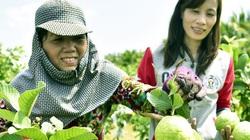 Kiên Giang: Bỏ công nhân về quê trồng ổi nữ hoàng và trồng rau sạch thu nửa triệu/ngày