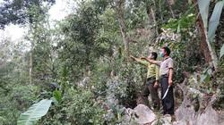 Phiêng Ban làm tốt công tác quản lý, bảo vệ rừng