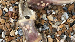 Cô gái phát hiện thủy quái có răng ở đuôi khi đang chạy bộ trên bãi biển