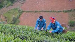 Hiệu quả những đồng Quỹ hỗ trợ nông dân ở Thuận Châu