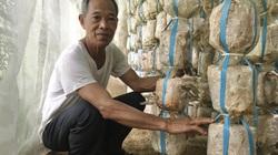 Đà Nẵng: Tuổi 60 mới tính chuyện làm giàu, đâu ngờ phát tài với nghề trồng nấm