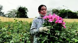 3 bước đột phá của nông nghiệp Thủ đô