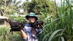 Học thủy sản, khởi nghiệp nuôi gà đen