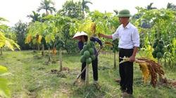 Sóc Sơn: Chuyển đổi 528ha đất trồng lúa, nhiều diện tích cho tiền tỷ
