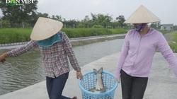 """Nuôi cá """"sông trong ao"""" một năm thu hoạch hơn 100 tấn cá"""