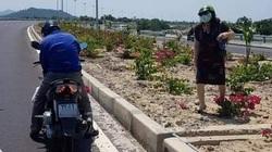 3.000 cây hoa giấy bị nhổ trên quốc lộ: Có thể khởi tố hình sự
