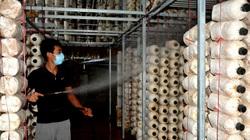 9X xứ Lạng khởi nghiệp với mô hình trồng nấm