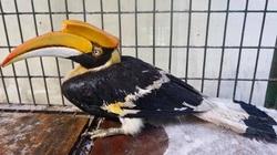 """Bắt được chim lạ nặng 3,5kg, mỏ """"khủng"""" bay lạc vào vườn nhà"""