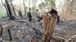 Tỉnh Bình Thuận kiểm tra vụ đốt phá thảm xanh trên núi Voi