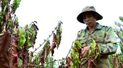 Nam Trung Bộ, Tây Nguyên trải qua hạn hán chưa từng có