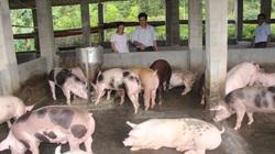 Nông dân làm giàu nhờ được Hội nông dân tư vấn, hỗ trợ kỹ thuật và vay vốn đầu tư