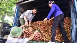 700 thương nhân Trung Quốc sang mua vải thiều phải cách ly 14 ngày, không có ngoại lệ