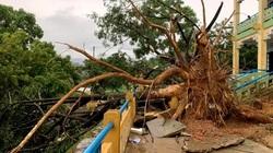 Mưa giông kèm lốc lớn ở miền núi gây thiệt hại nhiều tài sản