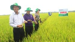 Vĩnh Phúc: Hết cảnh còng lưng cấy lúa, thu lãi cao nhờ ứng dụng mạ khay cấy máy