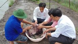 Học nghề xong, nhà nông Đất Mũi ứng phó hiệu quả với hạn, mặn