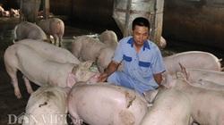 """""""Ông lớn"""" C.P tăng giá heo hơi lên 78.000 đồng/kg và chiến lược chiếm thị phần ngành thịt lợn"""