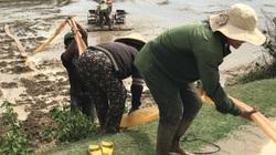 Tây Nguyên: Suối nguồn cạn kiệt, cây trồng héo khô, nông dân vừa sạ lúa đã biết trước thua lỗ