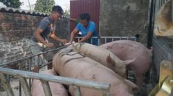 Giá heo hơi hôm nay 27/5: Giá cao chót vót, dịch tả lợn châu Phi tái xuất ở 20 tỉnh