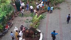 Vụ cây đổ làm 18 học sinh thương vong: Cây còn xanh tốt, vừa được chăm sóc