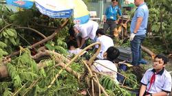 Cây phượng bật gốc giữa sân trường, 13 học sinh bị thương