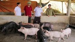 Dịch tả lợn châu Phi rình rập tái phát diện rộng