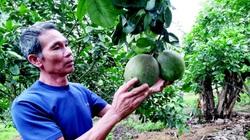 Lão nông xứ Tuyên sáng chế máy hút sâu chè, máy gieo hạt 4 trong 1 lại còn làm vườn giỏi
