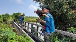 Kỳ thú xem thả loài chim săn chuột đồng ở Quảng Trị