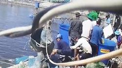 Vụ thương lái trộm tôm ở Cà Mau: Khởi tố bắt tạm giam 3 người