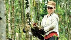 Quảng Ngãi: Huyện có vội khi khai tử dự án vùng chuyên canh quế 500 ha?