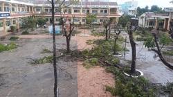 Làm báo cùng Dân Việt: Xin đừng vội chặt phá, hãy chung sống an toàn cùng cây xanh