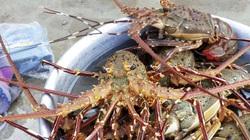 Thả lưới ở rạn san hô chết, không ngờ trúng đậm mẻ cá chuồn bay, tôm hùm biển