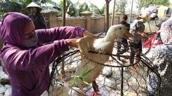 Giá gia cầm hôm nay 31/5: Vịt thịt sắp cán mốc mới, gà công nghiệp dễ bán