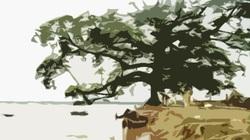 Truyện dự thi: Bóng đa ven sông