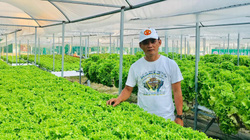 Nhượng lại công ty, 7X thuê đất trồng rau thủy canh thu 2 triệu đồng/ngày