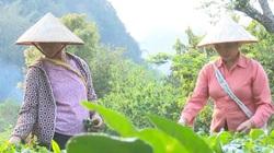 Sơn La: Nhiều hộ dân tình nguyện xin ra khỏi diện hộ nghèo