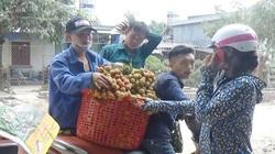 Quảng Ninh: Chi 13 tỷ để tăng giá trị cho vải chín sớm Phương Nam