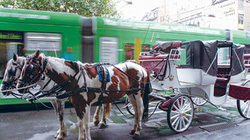 Lóc cóc vó ngựa ở Melbourne