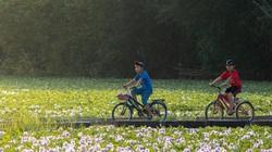 Mùa hoa lục bình khoe sắc tím mênh mang ở miền quê Quảng Nam