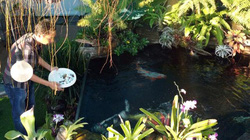 Biến sân thượng 200m2 thành khu vườn nhiệt đới đẹp như trong mơ