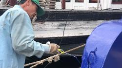 Ảnh: Vịnh Hạ Long mở cửa đón khách, cảng tàu du lịch vẫn vắng tanh