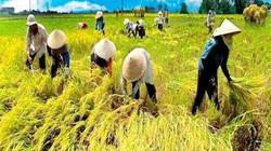 Xuất khẩu gạo: Giờ là lúc chuẩn bị tốt vụ lúa hè thu