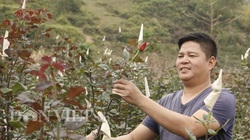 Bỏ phố lên núi trồng hoa tình yêu, trai Hà Nội kiếm nửa tỷ đồng mỗi năm